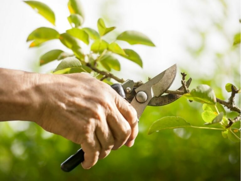 Pruning service by Eco-lectric of Bradenton