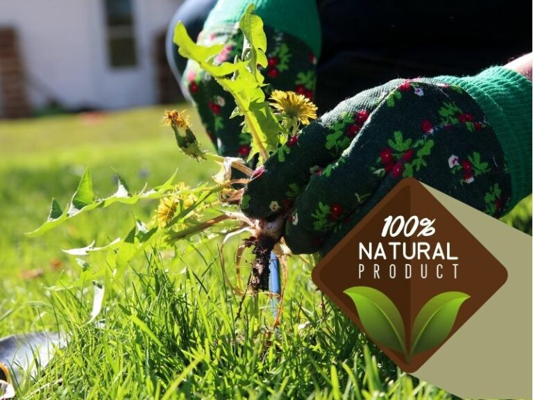 100% percent natural weed control service by Eco-Lectric of Bradenton